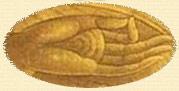 Hand Position: Tibetan Healing Breathing